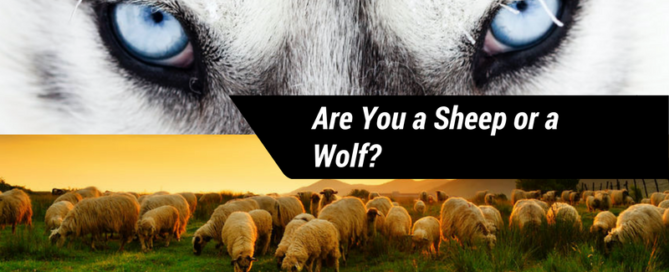 Are you a Sheep or Wolf-